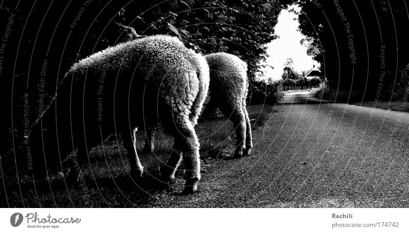 Streetphotography (on wrong tracks) Black & white photo Exterior shot Detail Abstract Deserted Day Shadow Contrast Silhouette Worm's-eye view Animal portrait