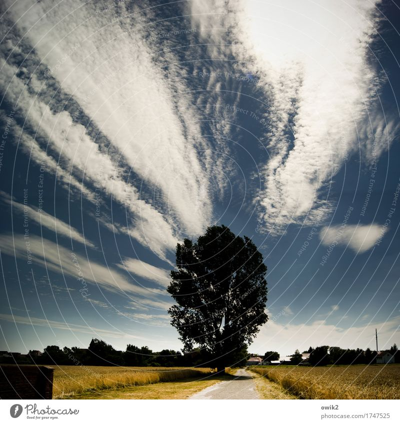 Sky Nature Summer Tree Landscape Loneliness Clouds House (Residential Structure) Far-off places Environment Lanes & trails Germany Bright Horizon Field Idyll