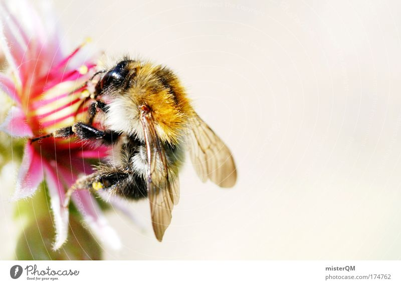 Nature Beautiful Animal Life Nutrition Small Blossom Flying Success Break Wing Cute Bee Delicious Collection Restaurant
