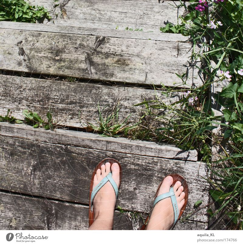 The footbridge Feminine Feet Plant Grass Wild plant Old Flip-flops Stairs Landing Toes Footwear Footbridge Broken Weed Colour photo Day