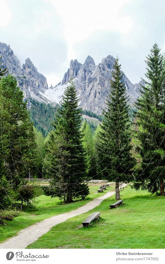 View to Monte Cristallo Vacation & Travel Tourism Trip Summer Summer vacation Mountain Hiking Environment Nature Landscape Plant Sky Clouds Tree Grass Fir tree