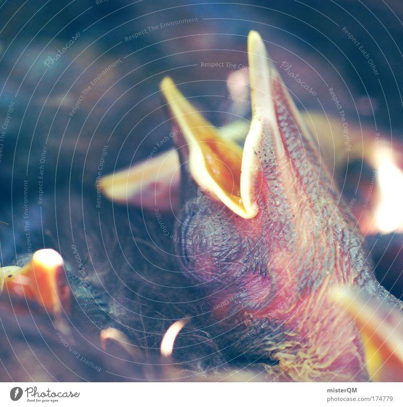 Life Relaxation Death Dream Warmth Bird Beginning Sleep Appetite Meditative Alcohol-fueled Stress Boredom Breathe Beak