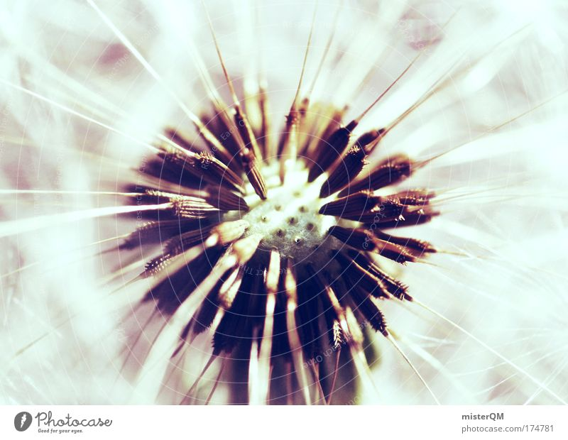 Nature Relaxation Air Art Bright Wind Esthetic Future Hope Symbols and metaphors Belief Flower Dandelion Blow Snapshot Easy