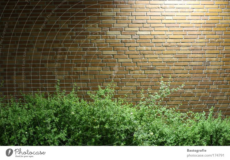 brick wall Colour photo Wall (barrier) Wall (building) Brick Plant Nature