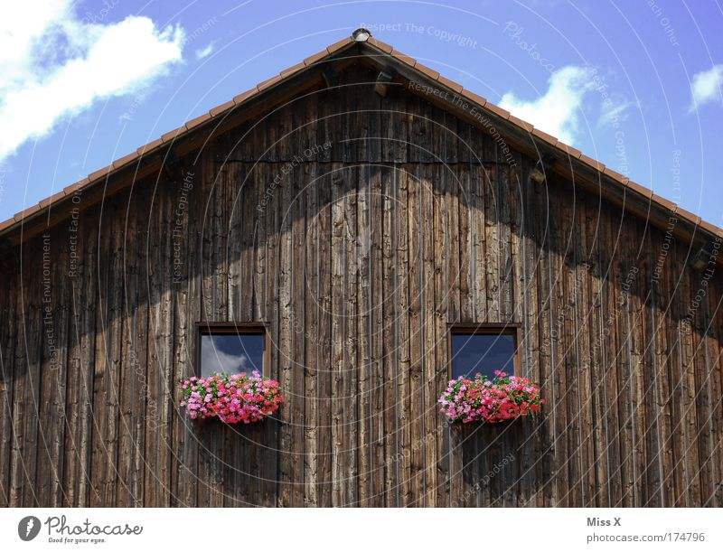 Old Plant House (Residential Structure) Window Blossom Poverty Roof Village Agriculture Hut Barn Attic Window board Geranium Wooden house