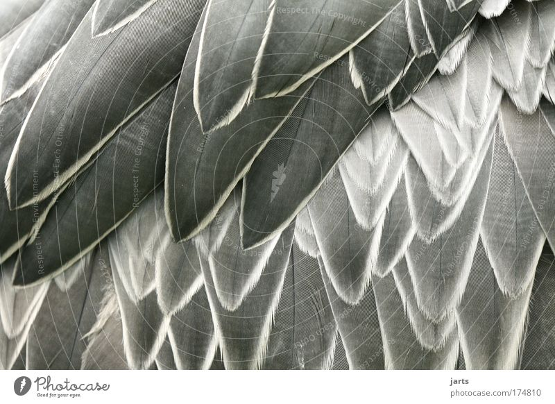 feathered Colour photo Black & white photo Exterior shot Close-up Detail Deserted Day Central perspective Animal Wild animal Bird Wing 1 Authentic Elegant