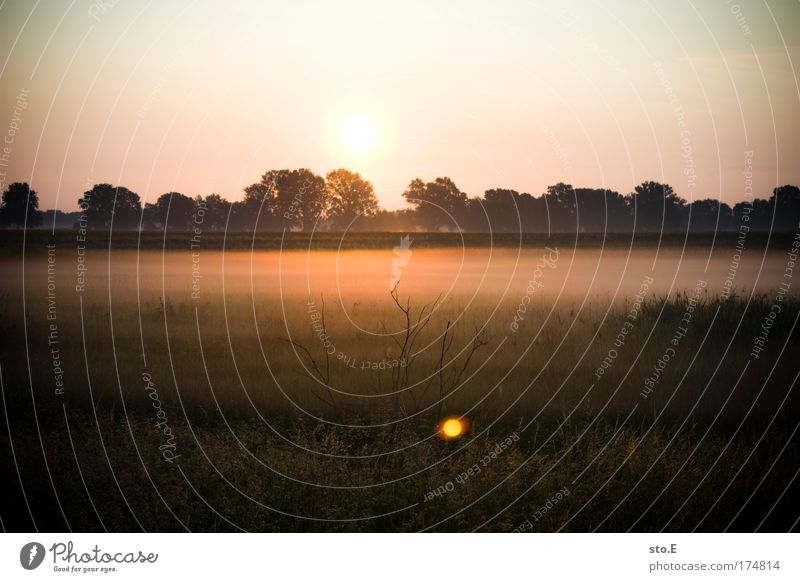 n bissl nature Colour photo Exterior shot Deserted Copy Space top Morning Dawn Light Shadow Contrast Silhouette Reflection Light (Natural Phenomenon) Sunlight