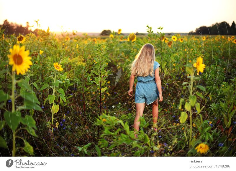 In the sunflower field Human being Feminine Child Girl Infancy 1 3 - 8 years Environment Nature Landscape Plant Summer Beautiful weather Sunflower