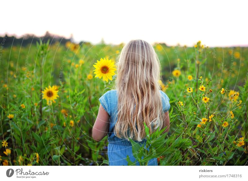 Sunny Human being Feminine Girl Infancy 1 3 - 8 years Child Environment Nature Plant Summer Flower Sunflower Sunflower field Field Observe Blossoming Think