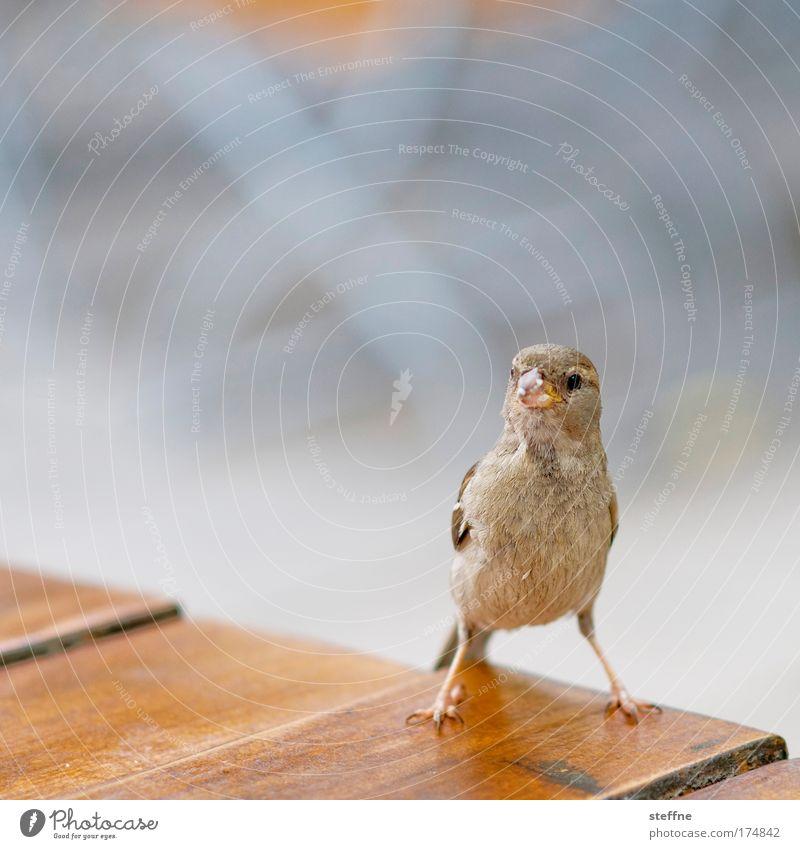 Nutrition Animal Bird Observe Curiosity Wild animal Sparrow