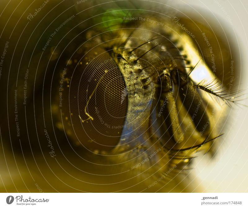 Animal Fly Animal face Lie Hideous Crash Night life