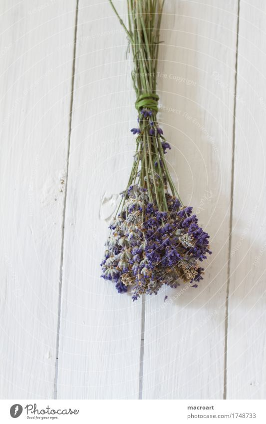 lavender Lavender floats Table Flower Blossom Bouquet Violet Fragrance Odor Wooden table Blossoming Comforting sedative Medicinal plant Medication Annoy Healthy