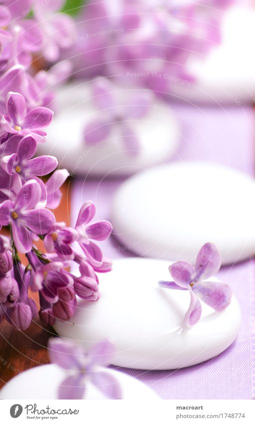 lilac Lilac Wellness Plant Stone hotstone hot stone Well-being Spa Vacation & Travel Violet Pink Magenta Macro (Extreme close-up) Close-up White