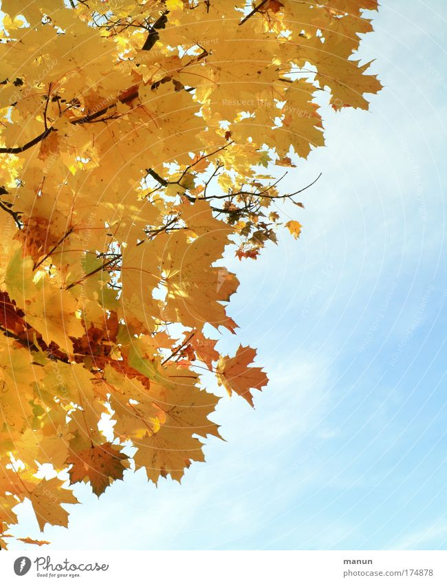 Sky Nature Old Sun Relaxation Leaf Calm Environment Yellow Autumn Natural Gold Transience Beautiful weather Change Harmonious