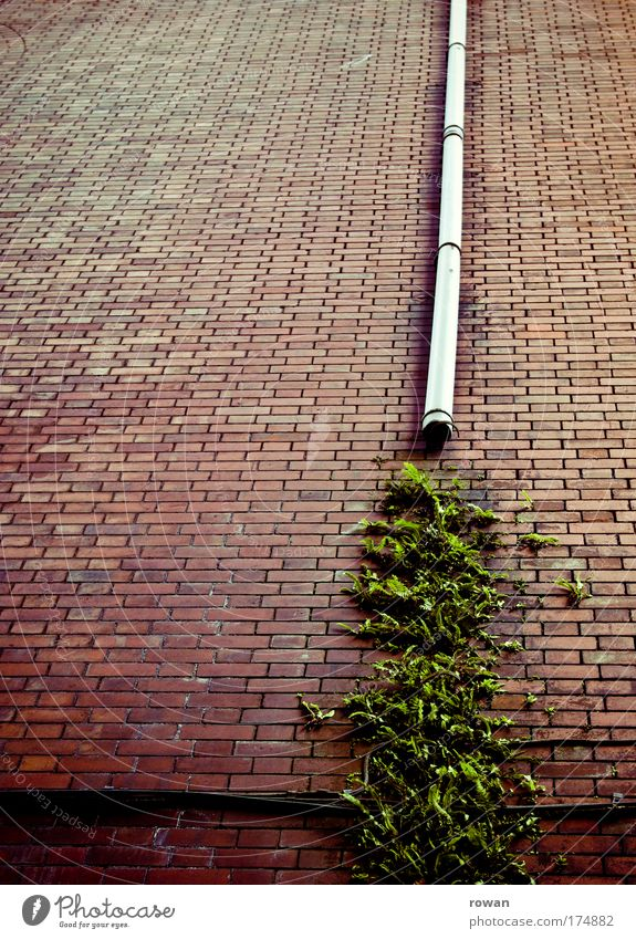 Nature Green Plant House (Residential Structure) Wall (building) Wall (barrier) Building Architecture Environment Drops of water Facade Growth Broken Wild Brick