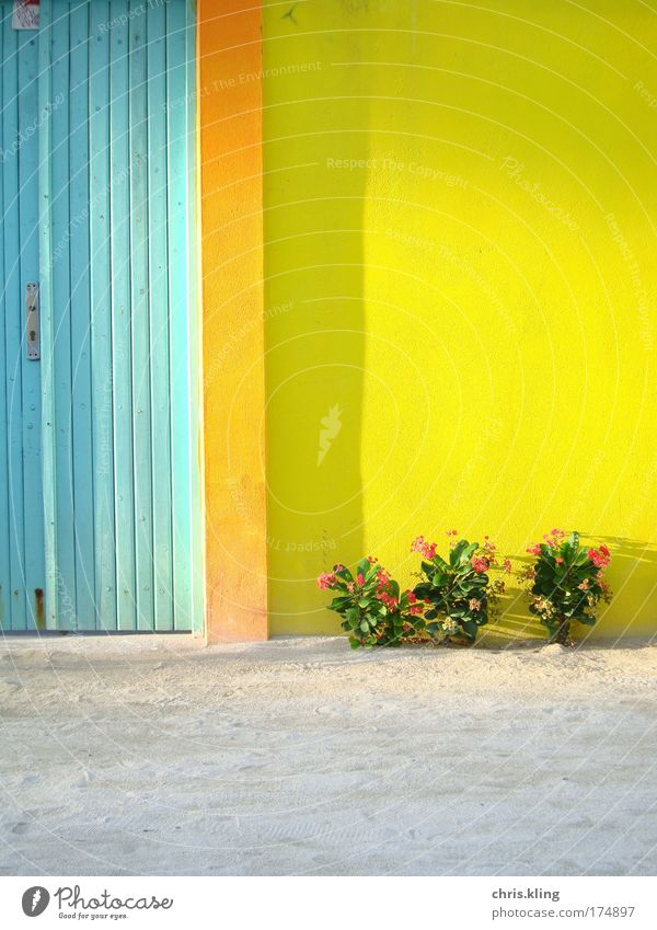 Plant Summer Beach Vacation & Travel Calm House (Residential Structure) Colour Relaxation Wall (building) Garden Dream Wall (barrier) Contentment Door Facade Safety