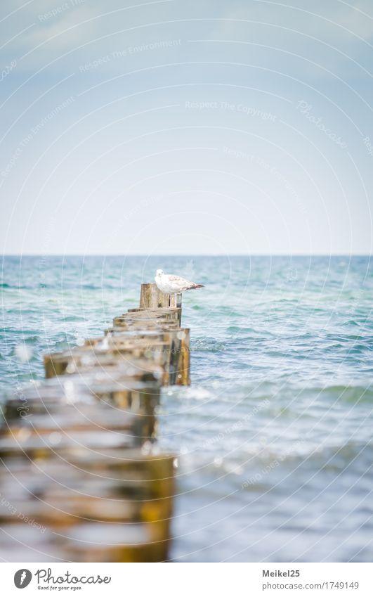 Sky Nature Vacation & Travel Water Ocean Beach Happy Moody Bird Warm-heartedness Baltic Sea Peace Summer vacation Positive