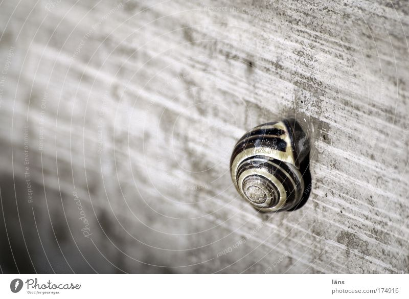 Home Animal Snail Safety Protection Safety (feeling of) Calm Slow motion Concrete Gray Stagnating Withdraw Housing Break Loneliness Stripe Snail shell