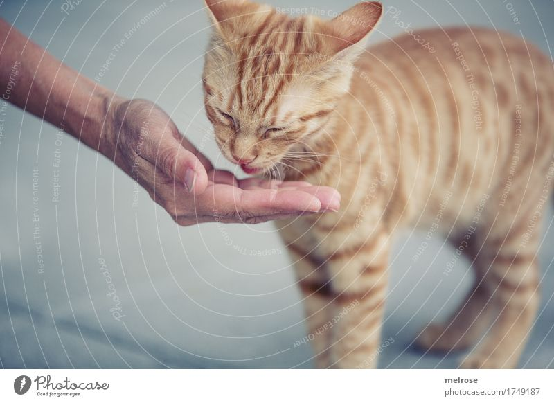Cat Human being Woman City Beautiful Hand Animal Adults Baby animal Style Small Gray Brown Stand Arm To enjoy