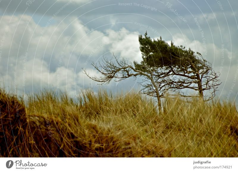 western beach Colour photo Exterior shot Deserted Day Environment Nature Landscape Plant Sky Clouds Climate Wind Tree Grass Coast Beach Baltic Sea Ocean Wild