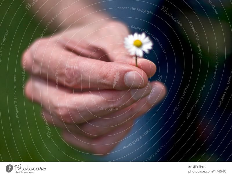 Small gesture Happy Human being Masculine Man Adults Arm Hand Fingers 1 Nature Flower Daisy Sign Friendliness Good Positive Beautiful Blue Yellow Green White