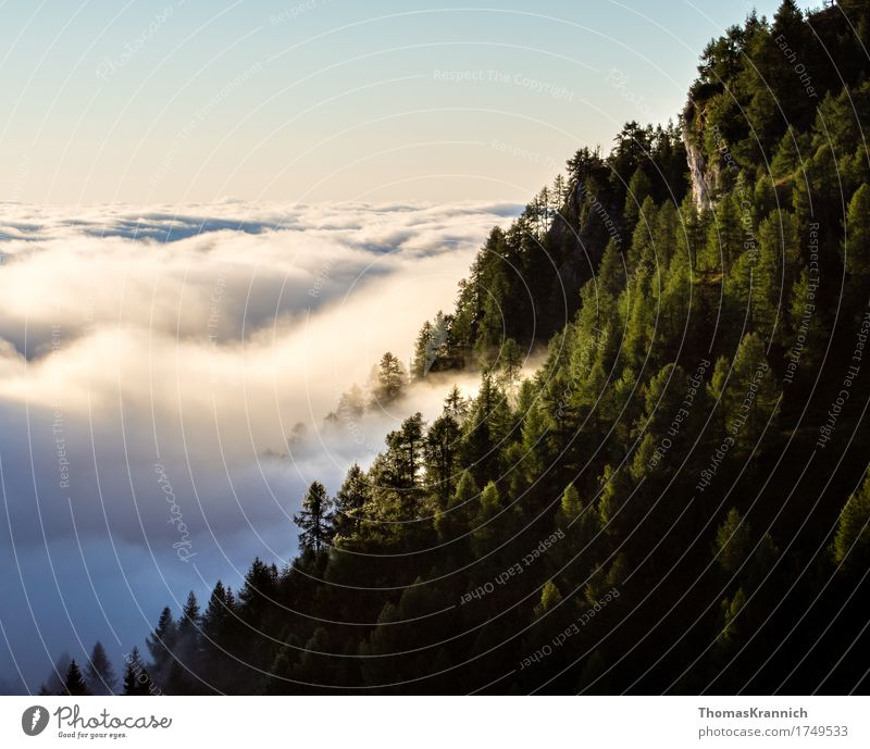Mountain forest above the clouds Vacation & Travel Nature Landscape Plant Air Sky Clouds Horizon Summer Beautiful weather Tree Forest Rock Alps Yellow False