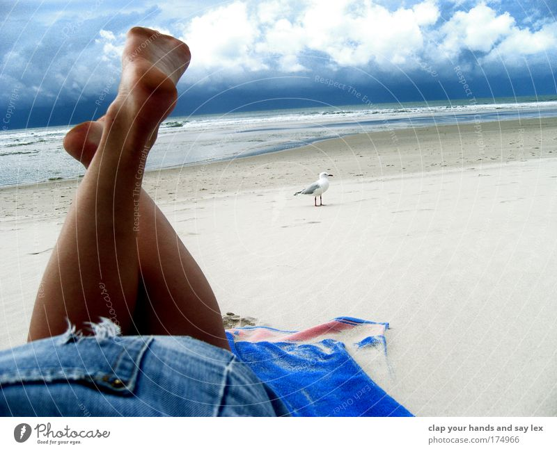 Human being Nature Youth (Young adults) Sky Blue Summer Vacation & Travel Calm Clouds Animal Relaxation Feminine Feet Legs Moody Bird