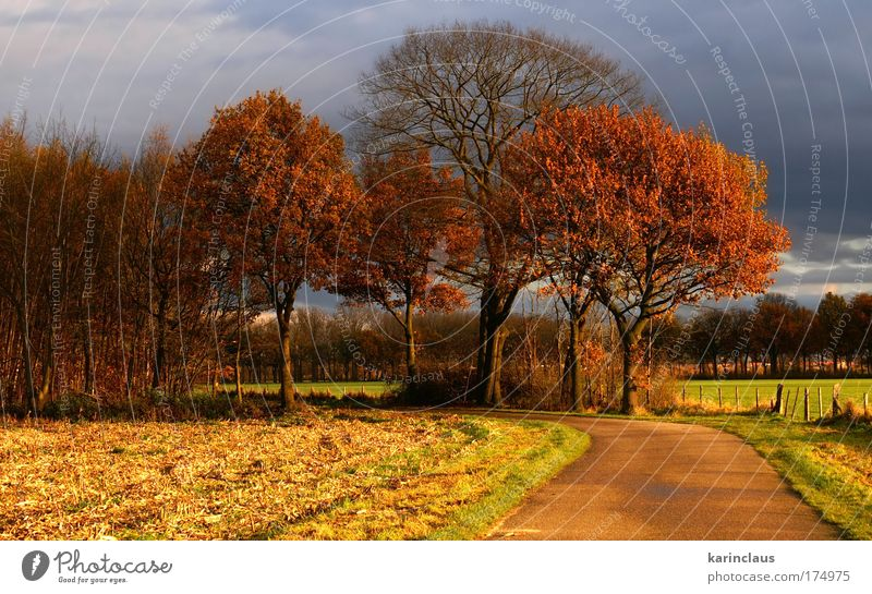 "autumn road Environment Nature Landscape Sky Storm clouds Sunlight Autumn Weather Bad weather Tree Grass Field ""rural,pasture,field,"" Street Lanes & trails"