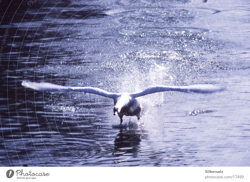 Difficult start Swan Beginning Aviation