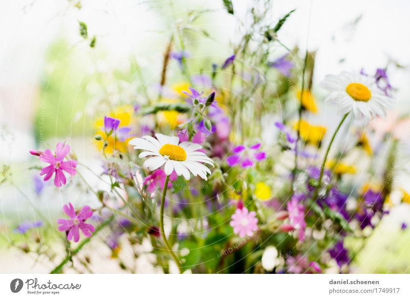 Plant Summer Green White Flower Leaf Yellow Grass Pink Bright Fresh Friendliness Violet Fragrance
