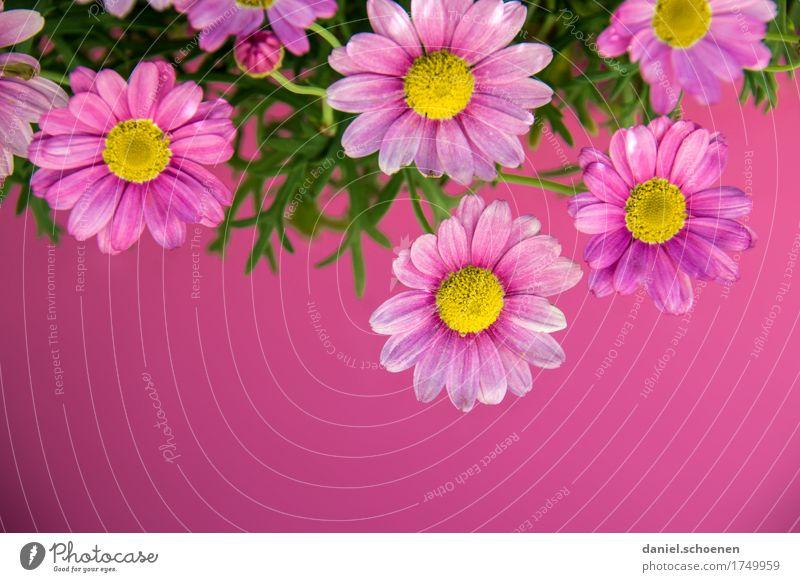PINk Plant Flower Blossom Esthetic Friendliness Fresh Violet Pink Multicoloured Detail Copy Space bottom
