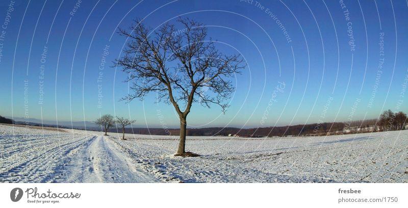 pano with tree Tree Winter Blue