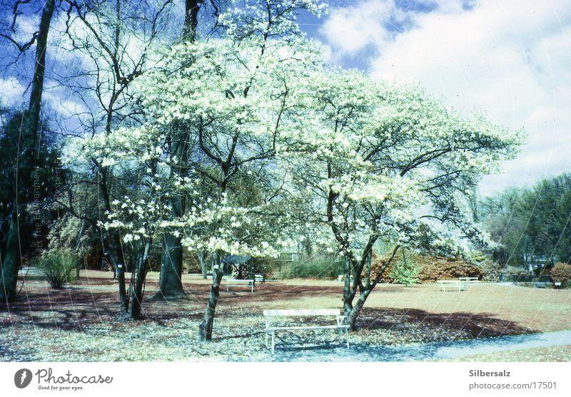 spring Spring Summer Blossom Flower Forest