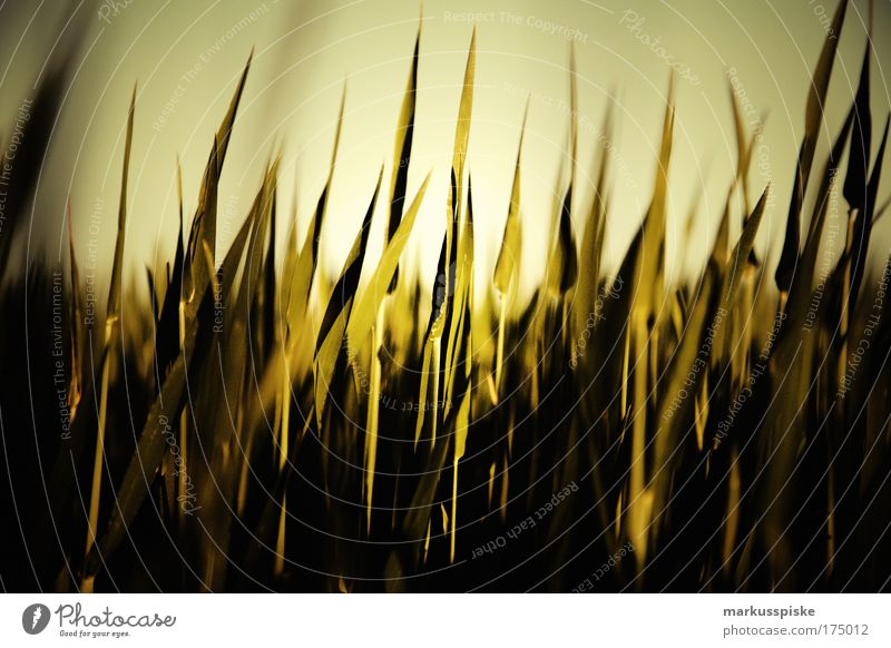 Nature Plant Sun Summer Far-off places Relaxation Freedom Landscape Environment Grass Moody Trip Climate Steppe Beautiful weather Blade of grass