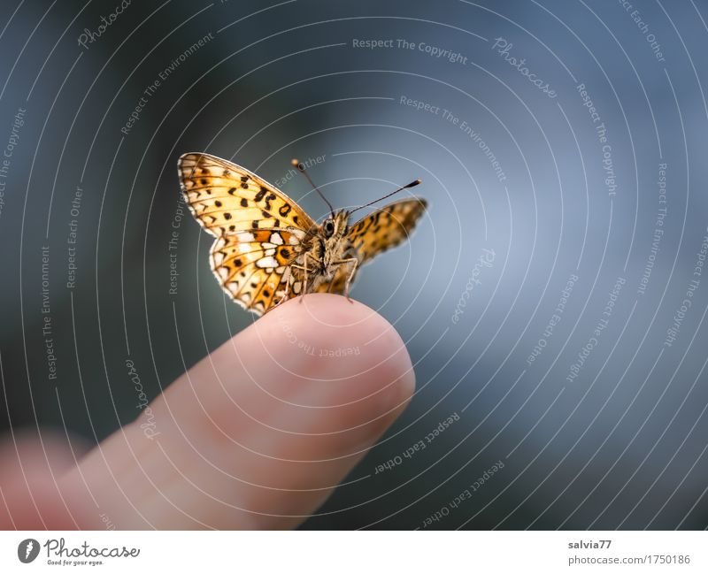 trustingly Fingers Nature Sky Summer Animal Butterfly Wing Insect 1 Brash Free Curiosity Cute Above Blue Brown Gray Black Ease Break Perspective Smooth