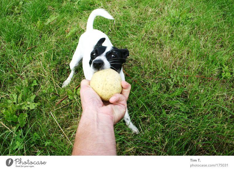 Dog Plant Joy Animal Think Lifestyle Wait Touch Blossoming Pet Fragrance Rotate Farm animal Rutting season