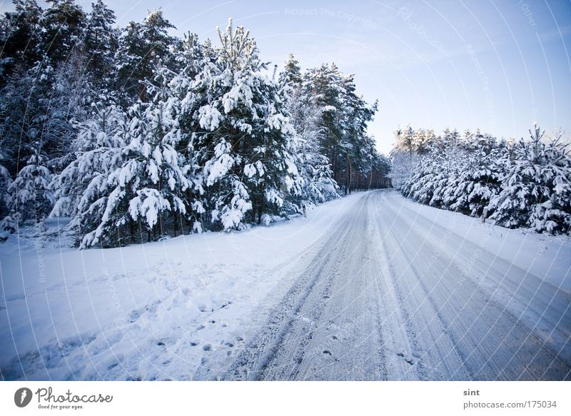 Where's the snow flight? Colour photo Exterior shot Deserted Twilight Wide angle Winter vacation Nature Landscape Cloudless sky Ice Frost Snow Forest
