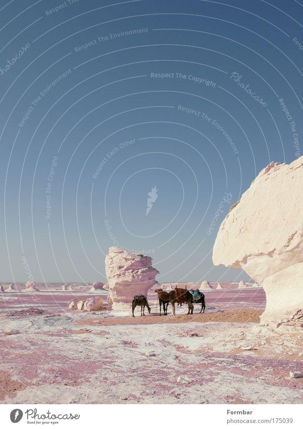 White Blue Vacation & Travel Far-off places Sand Trip Adventure Tourism Desert Safari