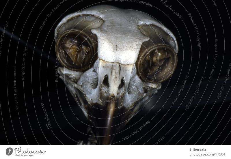 Head Transport Skeleton Death's head
