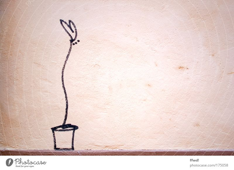 Beautiful Flower Loneliness Love Wall (building) Wall (barrier) Contentment Facade Heart Happiness Uniqueness Romance Simple Creativity Painting and drawing (object) Infatuation
