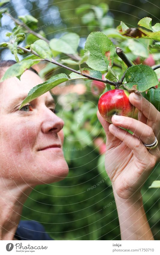 roo cheeks Apple Nutrition Organic produce Lifestyle Healthy Eating Gardening Harvest Apple harvest Woman Adults Face Hand 1 Human being 30 - 45 years Nature