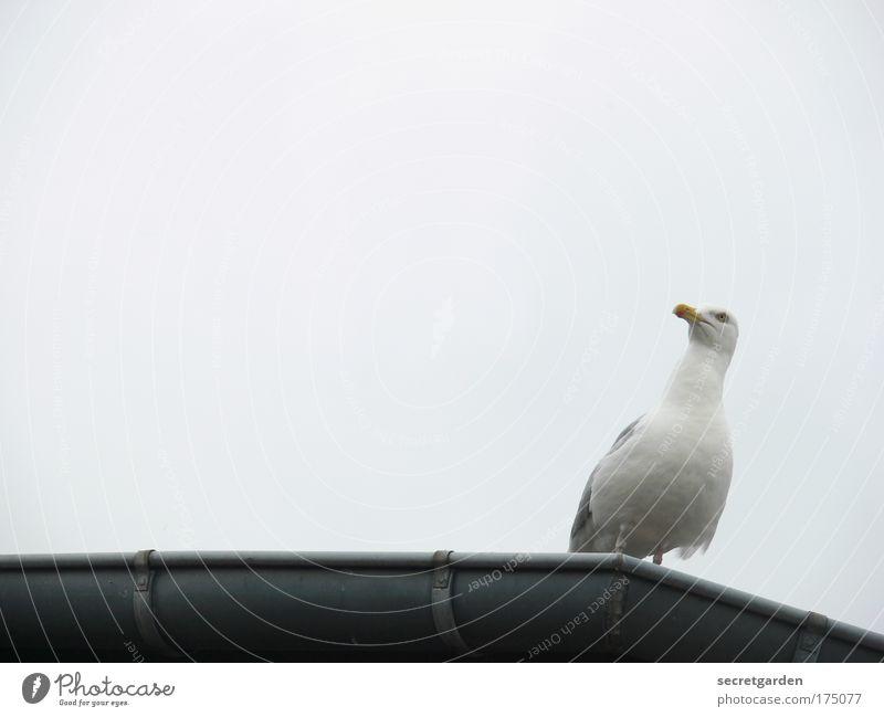 White Animal Coast Seagull Bad weather Eaves