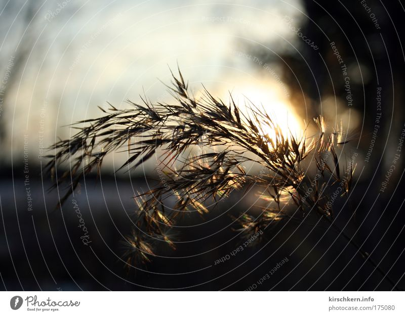 In backlight Colour photo Exterior shot Evening Contrast Sunlight Sunbeam Back-light Shallow depth of field Nature Grass Bushes Warmth Brown Yellow Day