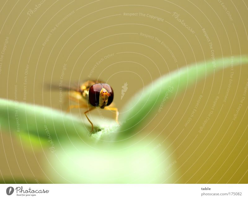 Nature Green Plant Eyes Loneliness Animal Yellow Life Relaxation Contentment Brown Fly Elegant Flying Free Sit