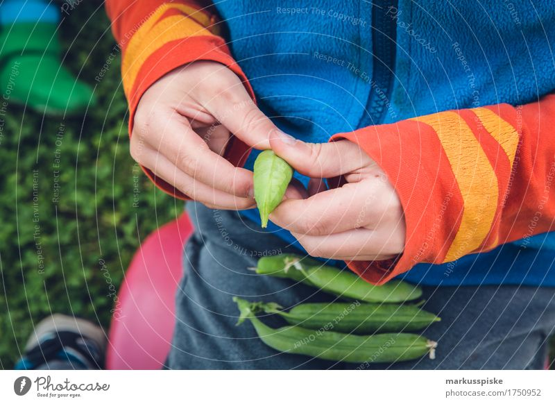 Human being Child Plant Healthy Eating Hand Joy Boy (child) Happy Garden Food Leisure and hobbies Nutrition Fresh Body