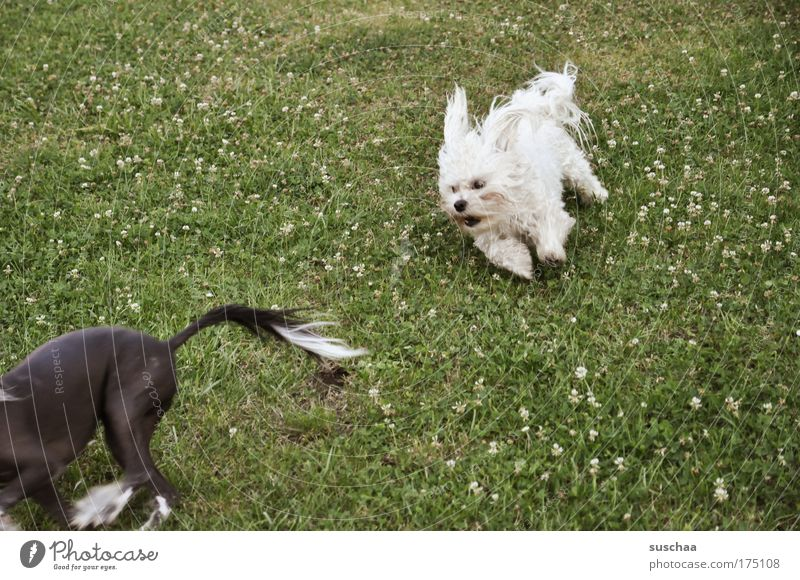 wauzi race Subdued colour Exterior shot Motion blur Playing Hunting Success Plant Spring Summer Garden Meadow Hair and hairstyles Black-haired White-haired