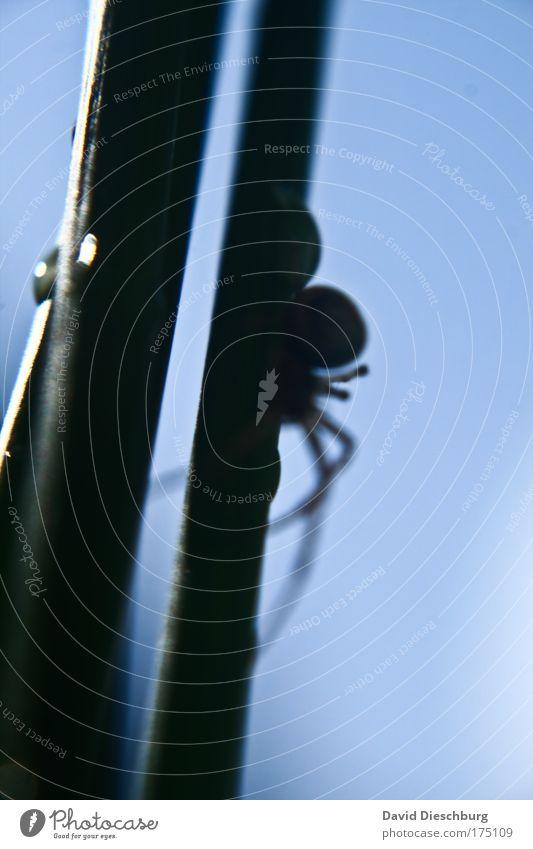 Nature Blue Animal Black Legs Line Wild animal Creepy Spider Feeler Bright background