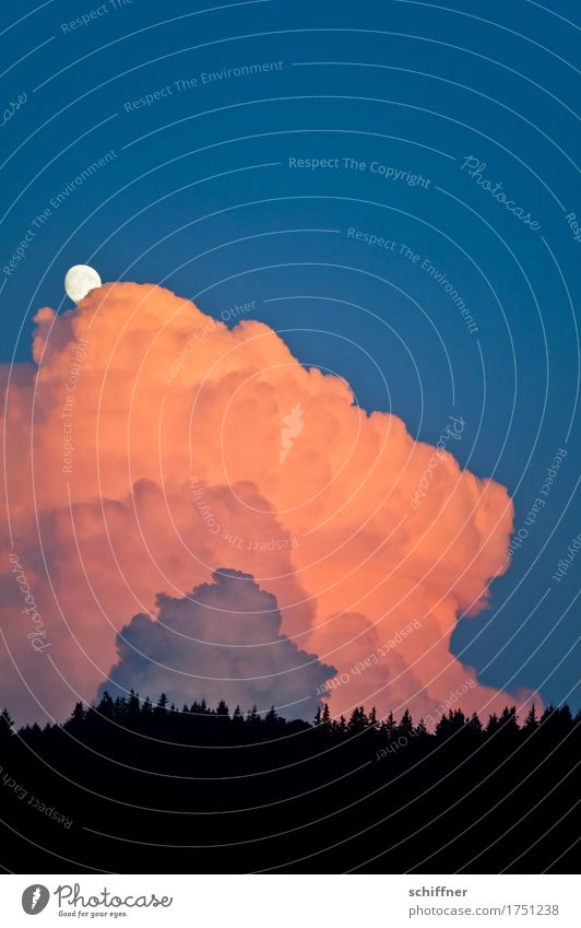 Monitored by the moon. Environment Nature Landscape Sky Clouds Storm clouds Sunrise Sunset Weather Beautiful weather Bad weather Thunder and lightning Forest