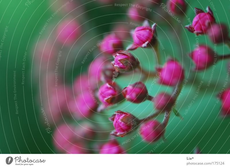 general partner Colour photo Multicoloured Exterior shot Close-up Detail Macro (Extreme close-up) Copy Space left Plant Tree Blossoming Green Violet Pink Red