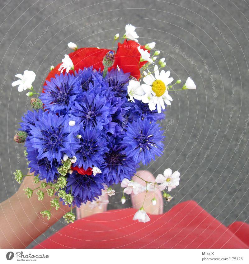 Woman Human being Hand Flower Joy Adults Love Emotions Garden Feet Feasts & Celebrations Birthday Trip Fresh Happiness Hope